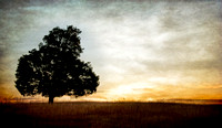 Lone Tree -- HDR