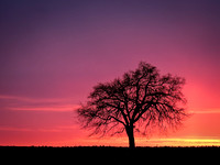 Sunrise, Sunset, Sky