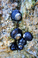 Snail Cluster